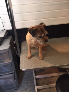 Dog Groomers Harrogate