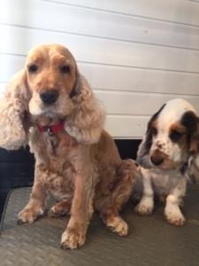 Dog Grooming Harrogate