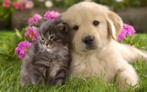 Small pet home visits harrogate